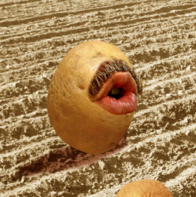 patates-lasherley.com_